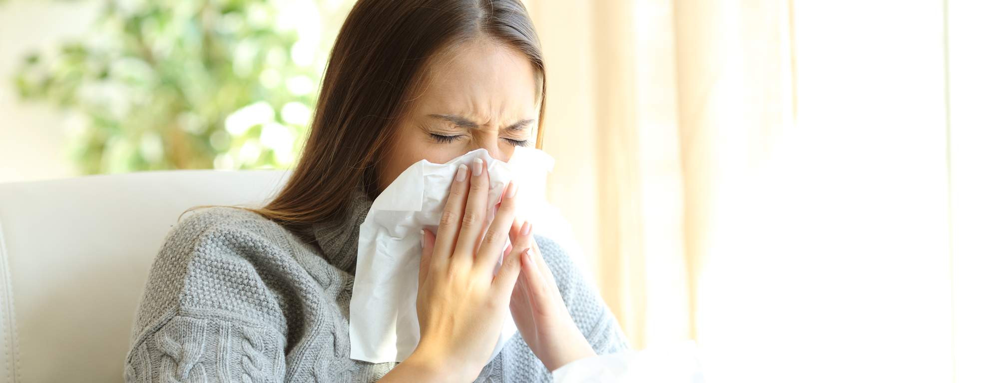 Dust Mites May Be Causing Your Winter Allergies picture